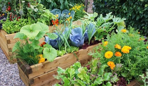 Growing Your Own Fruit and Veggie Garden